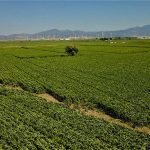 Farmland prices in Turkey in 2021 - Consult your agricultural consultant before you make your decision https://scagriconsult.com