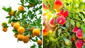 Fruits to grow in Turkey https://scagriconsult.com