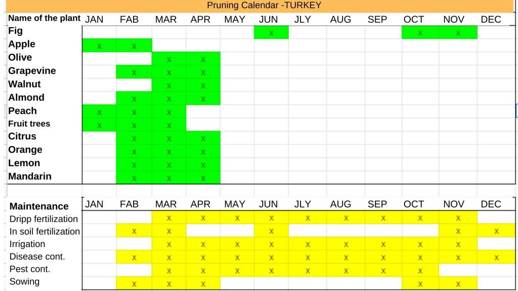 Maintenance work in fruit gardens in Turkey is an essential process for a healthy garden and maximum yield. Fruit garden maintenance calendar of Turkey https://scagriconsult.com