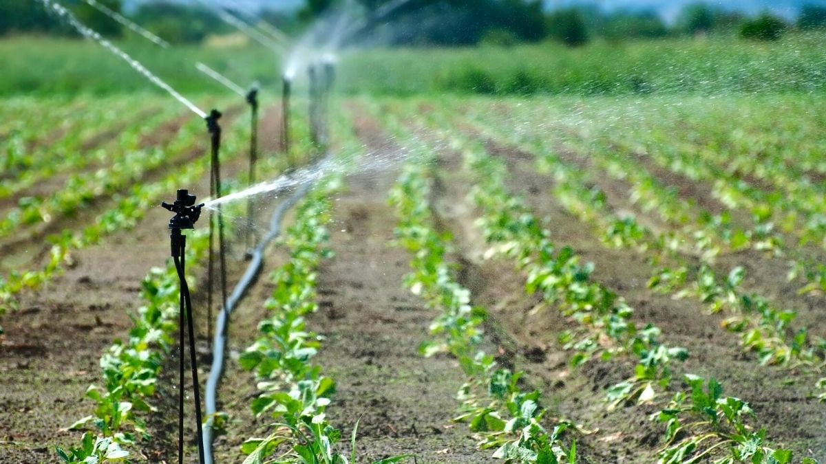 irrigation and drainage services in Turkey. https://scagriconsult.com