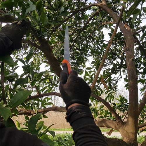Pruning and grafting service in turkey https://sagriconsult.com