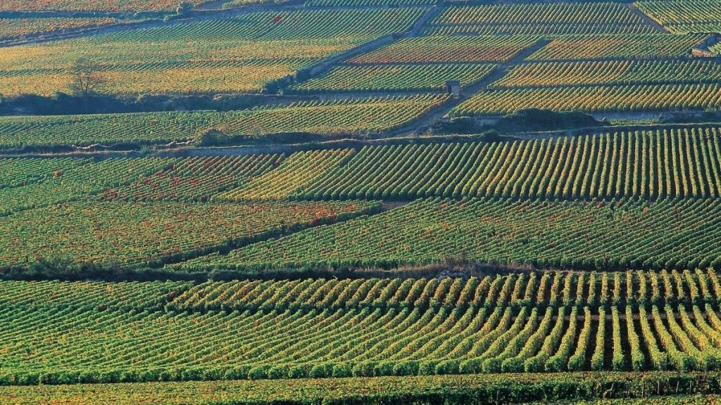 Are you eligible to buy land in turkey? Here is the information if you can buy farmland or property in Turkey. https://scagriconsult.com