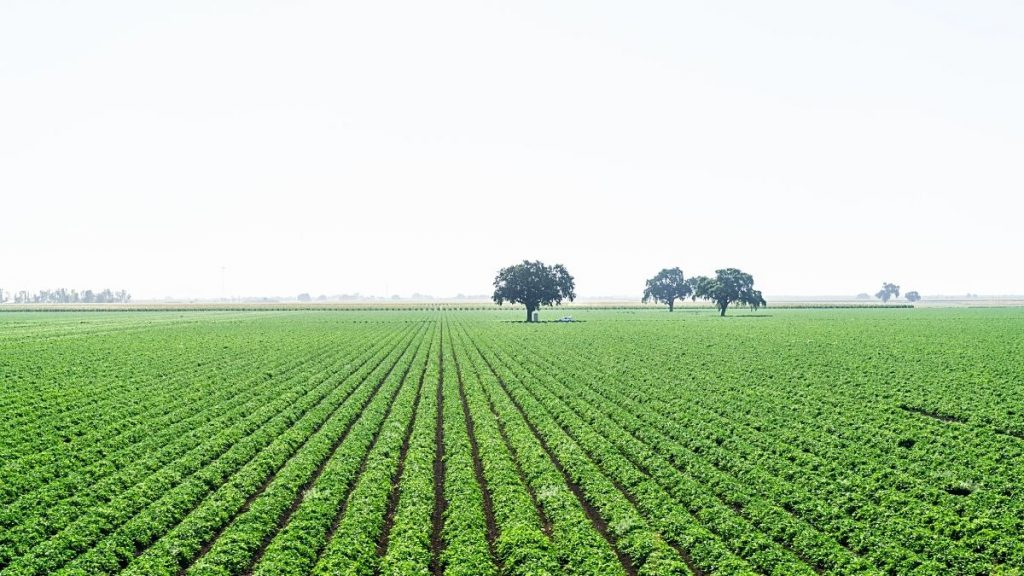 Best Regions For Buying Agricultural Land in Turkey https://scagriconsult.com