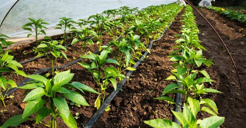 advantages of drip irrigation in agriculture https://scagriconsult.com